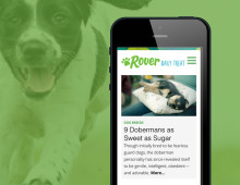 Rover Blog Design