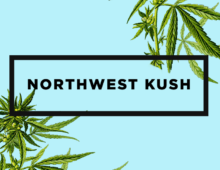 Northwest Kush Branding and Website